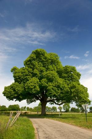 Big castagno bel paesaggio agrario