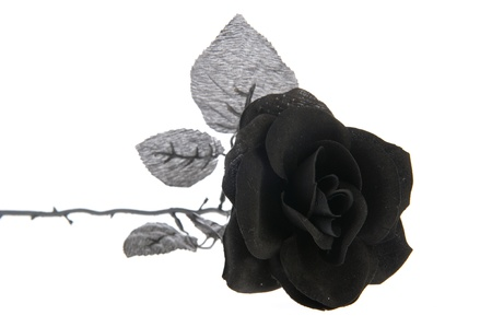 rose isolated: Artificial black rose for halloween holidays