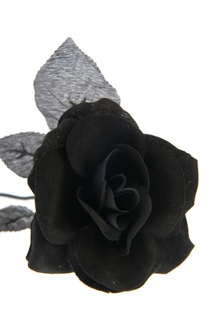 Artificial black rose for halloween holidays photo