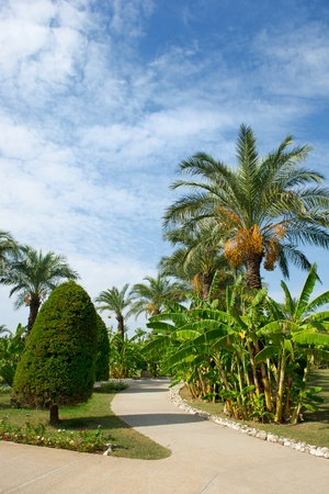 Tropical garden with palm trees and banana trees photo