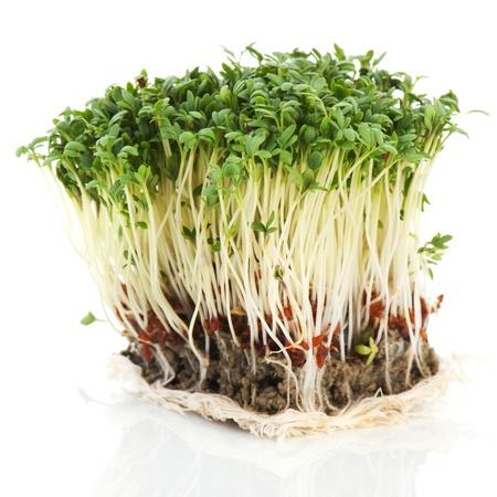 clod: clod fresh garden cress isolated over white Stock Photo