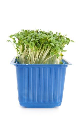 Blue plastic box with fresh garden cress