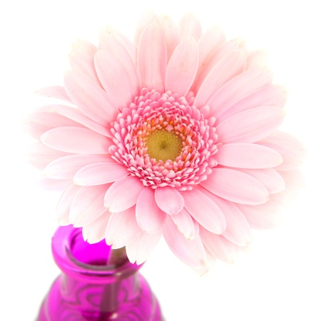 Little pink vases with single Gerber flowers isolated over white background photo