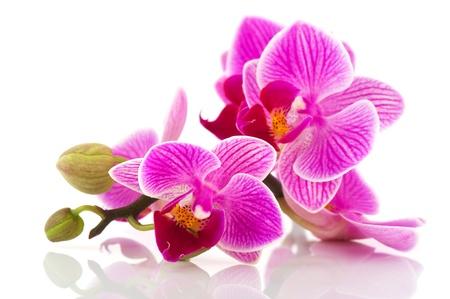Tropische roze orchidee geà ¯ soleerd op witte achtergrond