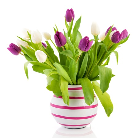 White And Purple Tulips In Striped Vase Stock Photo Picture And