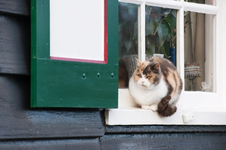 Colorful calico cat sitting in Dutch window Stock Photo - 12729361