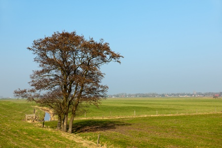 Typical flat Dutch landscape with tree in spring photo
