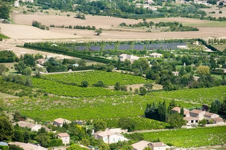 gordes: Vineyard in French landscape near Gordes Editorial