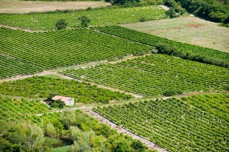 gordes: Vineyard in French landscape near Gordes Stock Photo
