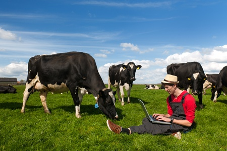 Young farmer working with laptop in farm field with black and white cows photo