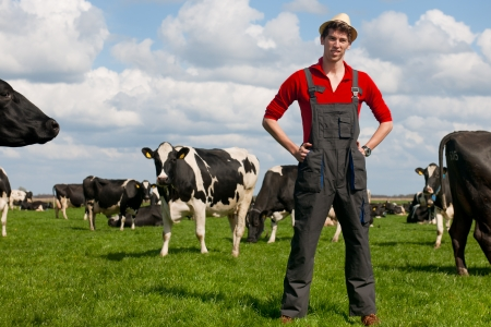 dutch typical:  young farmer in field with livestock cows