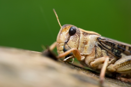 cricket insect: Cricket insect on tree Stock Photo
