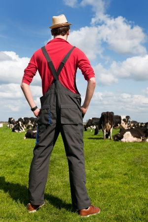 back country: Typical Dutch landscape with farmer and black and white cows in the meadows Stock Photo