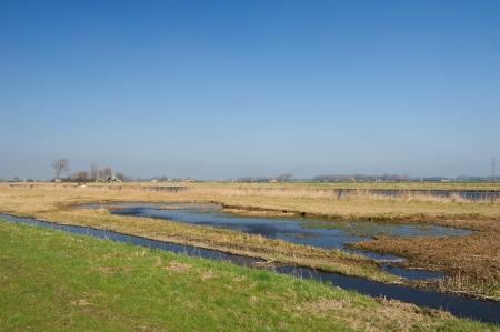 Typical Dutch landscape with meadows and swamp photo