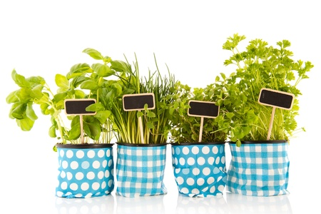 Several pots with kitchen herbs on white background photo