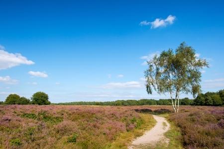 Landschap met bloeiende heide planten Stockfoto
