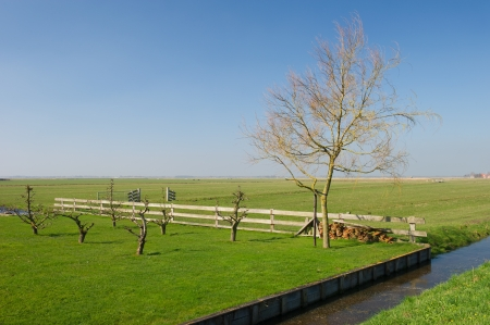 Typical Dutch landscape on island De Woude in Holland photo