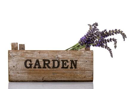 庭箱に紫のラベンダーの小枝