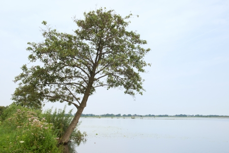 plassen: Landscape with tree and lake at Dutch Ankeveense plassen