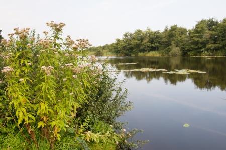 plassen: Lake in Holland at the Ankeveense plassen