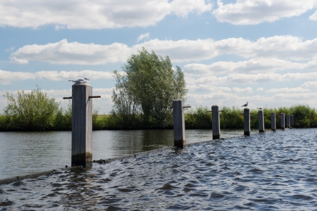 eem: Poles in river with seagulls