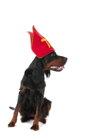 sinterklaas: Dutch dog for Sinterklaas holidays Stock Photo