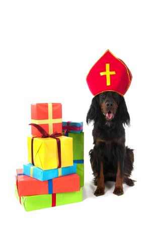 dutch Sinterklaas dog with many presents Standard-Bild