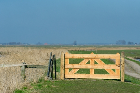 Dutch landscape with closed wooden fence in the meadows photo