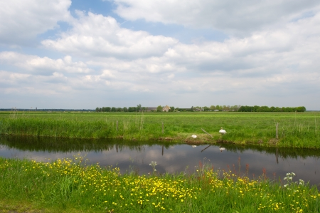 Agricultural landscape with water, couple swans and meadows Stock Photo - 17629623