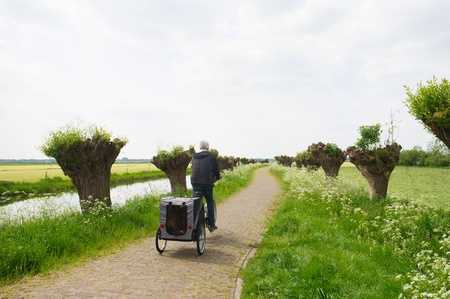 pollard willows: Dutch landscape in spring with row pollard willows and cow parsley and man with dogcar on the bike Stock Photo