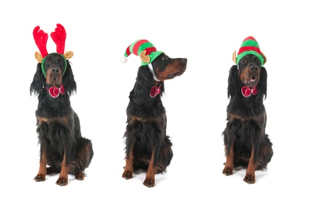 Funny dogs dressed for Christmas photo