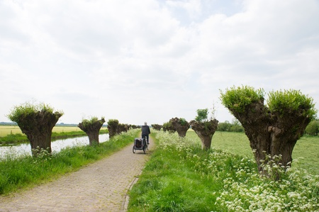 Dutch landscape in spring with row pollard willows and cow parsley and man with dogcar on the bike photo