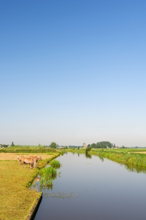 Dutch landscape in Friesland with horses water and windmill at the horizon photo