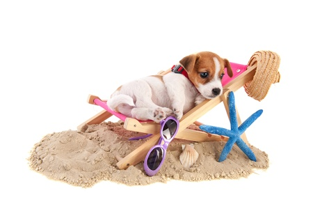 Little cute beach puppy resting in chair at the beach photo