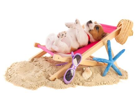 椅子に休んで子犬かわいいビーチ 写真素材