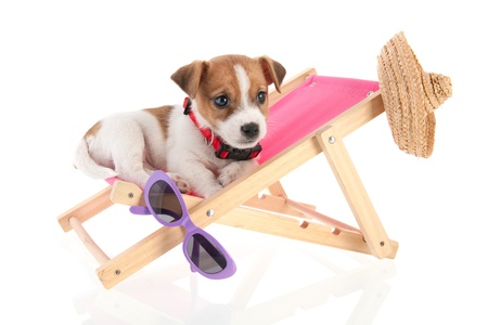 Little cute beach puppy resting in chair Stock Photo - 18821140