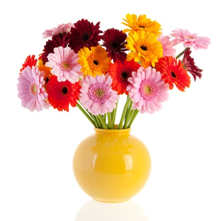 白い背景で隔離されたガラス花瓶に花束ガーバー花