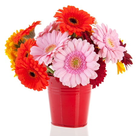 Bouquet Gerber flowers in red bucket isolated over white background photo