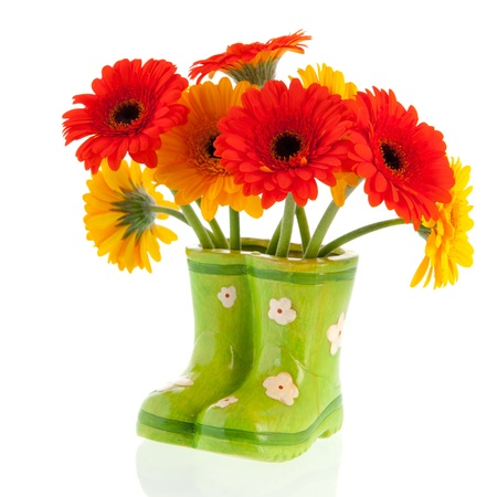 Gerber flowers in green boots on white background photo