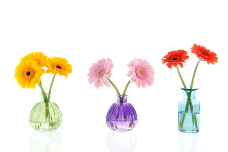 Glass vases Gerber flowers isolated over white background photo