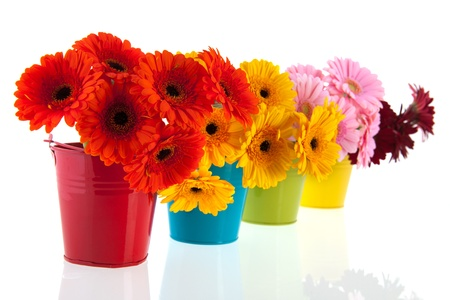 Colorful row buckets with Gerber flowers photo