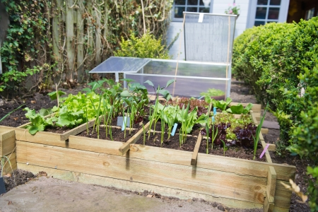 ail: Vegetable garden with assortiment vegetables and cold container