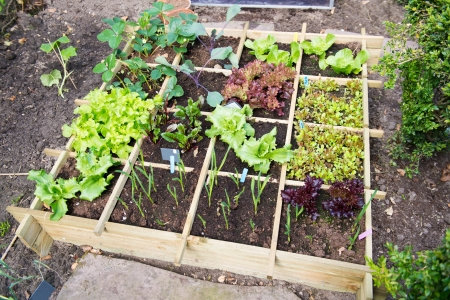 wooden metre: Vegetable garden with assortiment vegetables and cold container