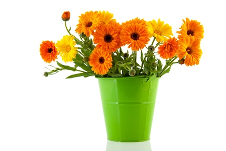 Orange marigolds in green bucket isolated over white background photo