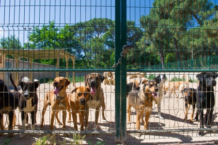 Dogs behind a closed fence in Spanish shelter
