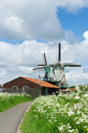 Wild flowers in front of windmills at the Dutch Zaanse Schans photo