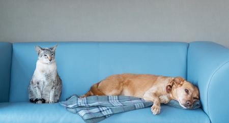 Kat en hond in het blauwe moderne bank