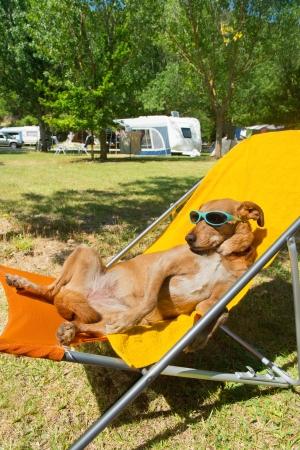 Hond op vakantie met een zonnebril buitenshuis