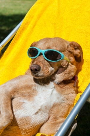 Dog on vacation with sunglasses outdoor photo