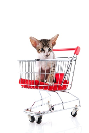 Little siamese kitten in shopping cart isolated over white background photo